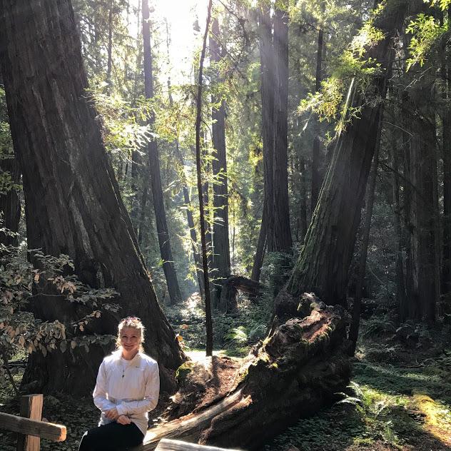 Muir Woods sunlight